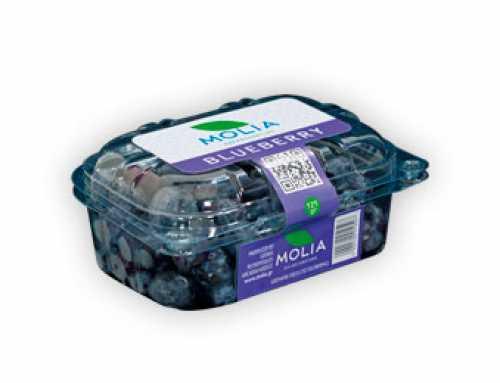 Molia – Blueberry